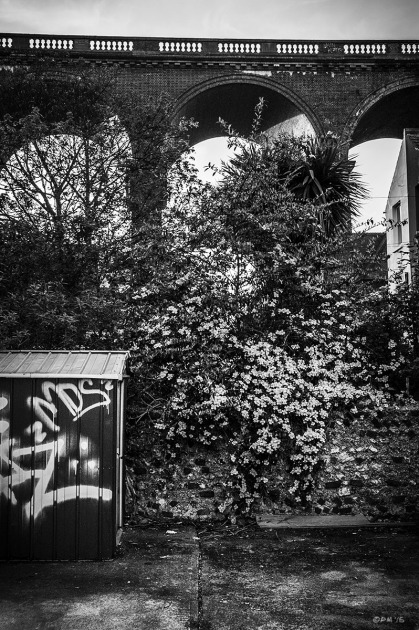 Victorian brick Viaduct looming over parking area with flowering creeper and shed with graffiti. Argyle Road Brighton UK. Monochrome Portrait.  © P. Maton 2015 eyeteeth.net