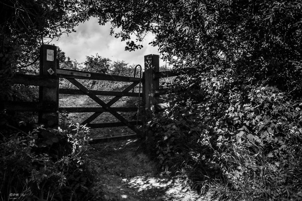 Footpath gate surrounded by Nettles and Hawthorn bushes with view through to field beyond. Wolstonbury Hill, East Sussex UK. Rural Monochrome Landscape. © P. Maton 2015 eyeteeth.net