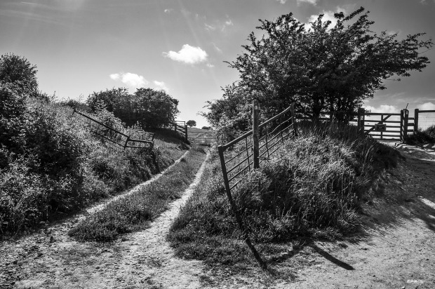 Gates on dirt track and footpath with Hawthorn bush, Wolsonbury Hill East Sussex UK. Rural Monochrome Landscape. © P. Maton 2015 eyeteeth.net