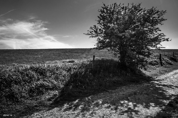 Hawthorn bush by fence next to chalk track with field horizon in background. Wolstonbury Hill, East Sussex UK. Rural Monochrome Landscape. © P. Maton 2015 eyeteeth.net