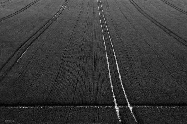 Wheat Field with white tractor tracks on chalk soil. Lancing Hill, West Sussex UK. Abstract Monochrome Landscape. © P. Maton 2015 eyeteeth.net