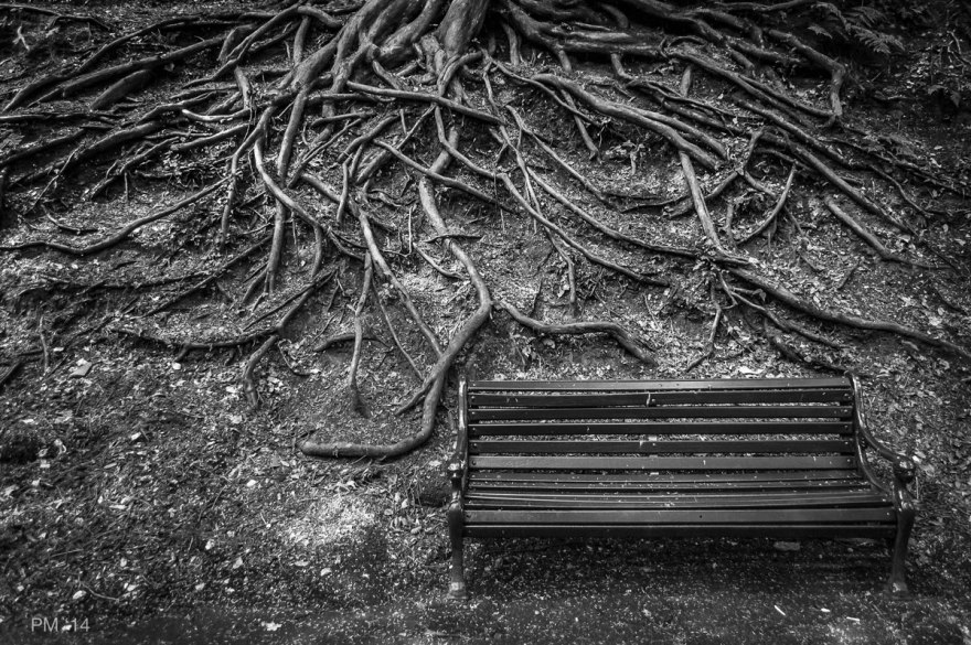 Park bench in front of slope covered with a tangle of Yew Tree roots Monochrome Alum Chine, Westbourne, Bournemouth UK P.Maton 2014 eyeteeth.net