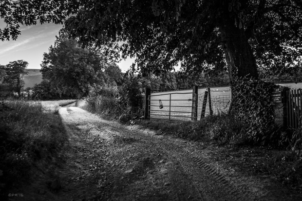 Country Lane / dirt track running next to gate and tree with fields and South Downs, tree line in background. Rural England. Fire East Sussex UK. Monochrome Landscape. © P. Maton 2015 eyeteeth.net