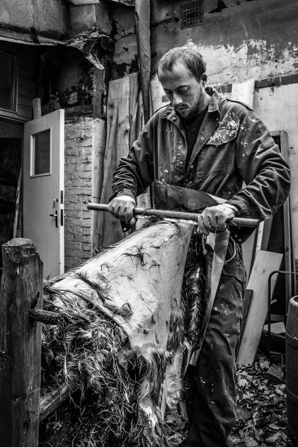 Man scraping fir off deer hyde as part of tanning process. Brighton UK. Traditional craft. Coachwerks, Brighton. Monochrome Portrait. © P. Maton 2015 eyeteeth.net