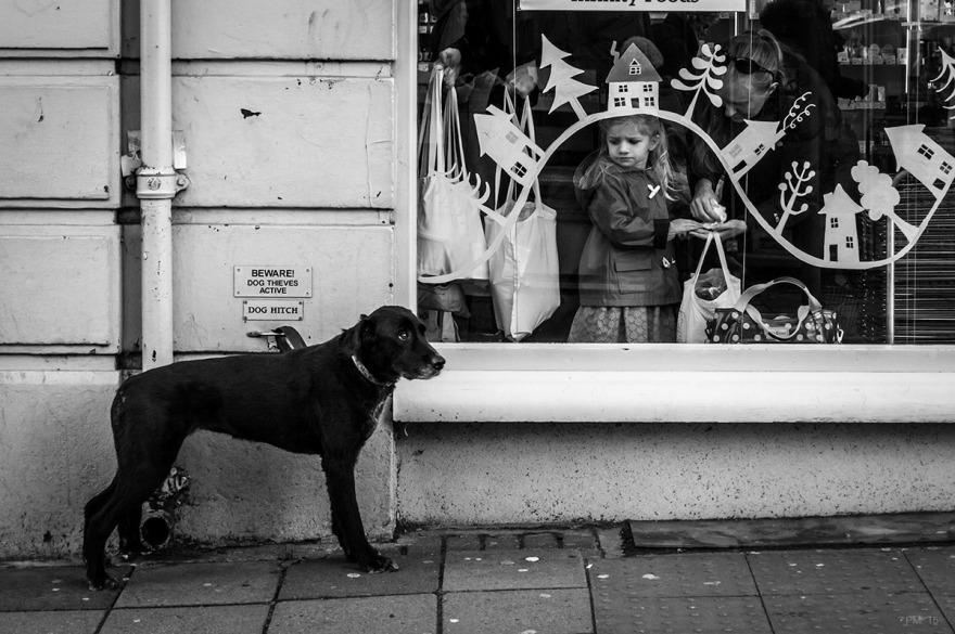Dog_Hitch_Window_Nort_Road_Brighton_P_Maton_21-11-15