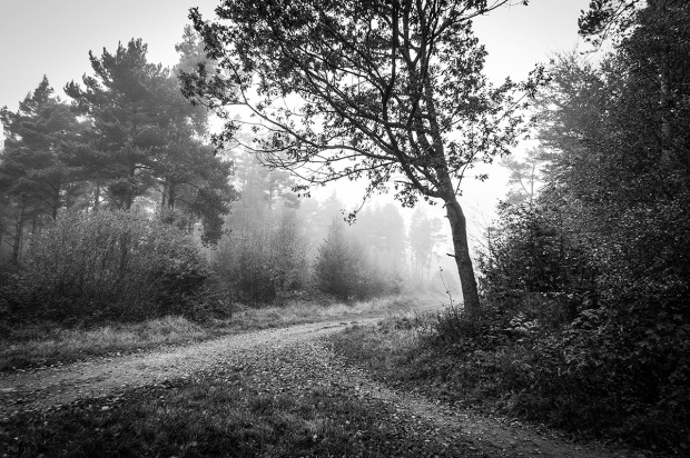 Converging pathways with trees in fog. St Leonards Forest Horsham West Sussex UK. Monochrome Landscape, black and white. © P. Maton 2015 eyeteeth.net
