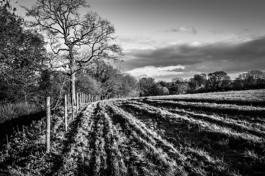Furrowed field of pasture next to new fence and oak tree in sunlight. Black and white rural landscape. Mortimer Berkshire England UK. © P. Maton 2015 eyeteeth.net