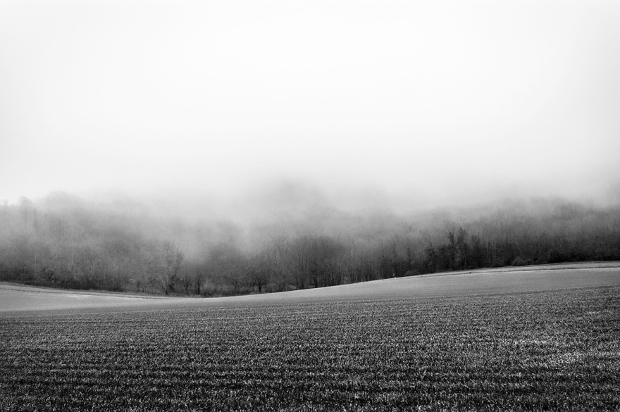 Field of young wheat with woodland disappearing into fog. Firle Plantation, Firle East Sussex UK. Black and white rural landscape photograph. © P. Maton 2016 eyeteeth.net