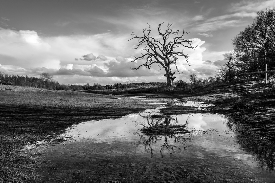 dead Oak tree with reflection in flood water with lanon dscape and raincoats in sky. Hitchcopse Pit, Oxfordshire UK. dramatic rural British landscspe. Copyright protection. P. Maton 2016 eyeteeth.net