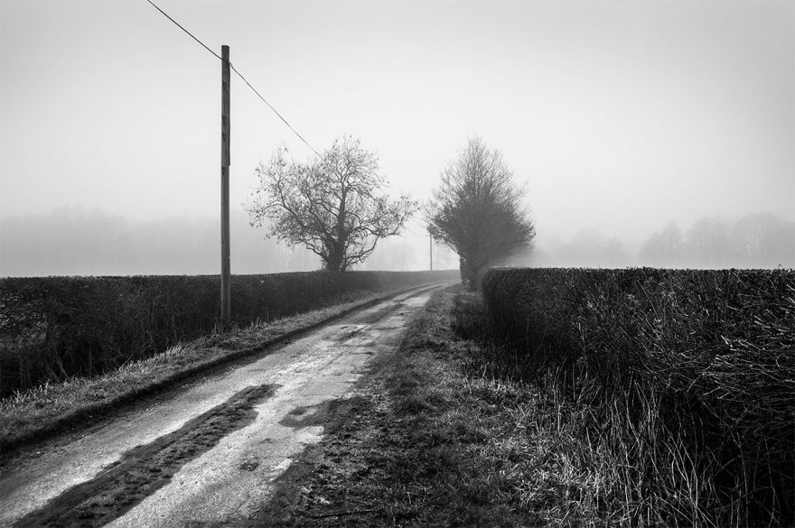 English country lane with newly trimmed hedgerows on a misty foggy morning. Mill Lane, Marcham, Oxfordshire. Black and white rural photograph. © P. Maton 2016 eyeteeth.net