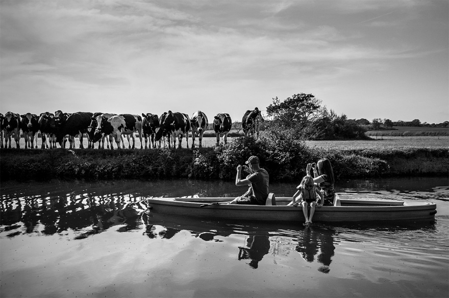 Family on rowing boat taking photographs with mobile phones of line of cows on river bank. River Ouse, Barcombe Mills East Sussex UK. Black and white photograph, rural countryside leisure. © P. Maton 2016 eyeteeth.net
