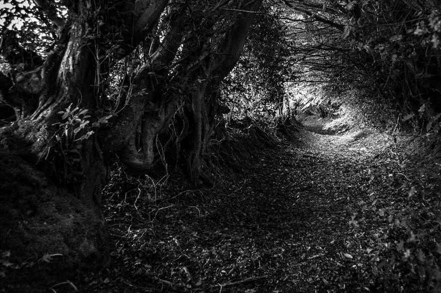 Trees overhanging ancient drove way path near Scaynes Hill, East Sussex UK. Black and white rural countryside photograph. © P. Maton 2016 eyeteeth.net
