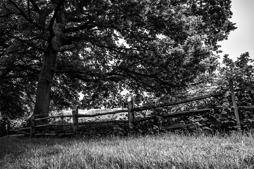 Split sweet Chestnut fence under Oak tree, Hooklands, East Sussex Uk. Black and white rural countryside photograph. © P. Maton 2016 eyeteeth.net