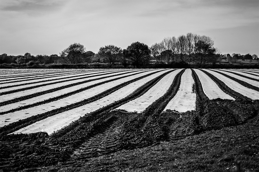 Plastic strips on ploughed field Barcombe Mills East Sussex UK. Black and white rural countryside with modern farming photograph. © P. Maton 2016 eyeteeth.net