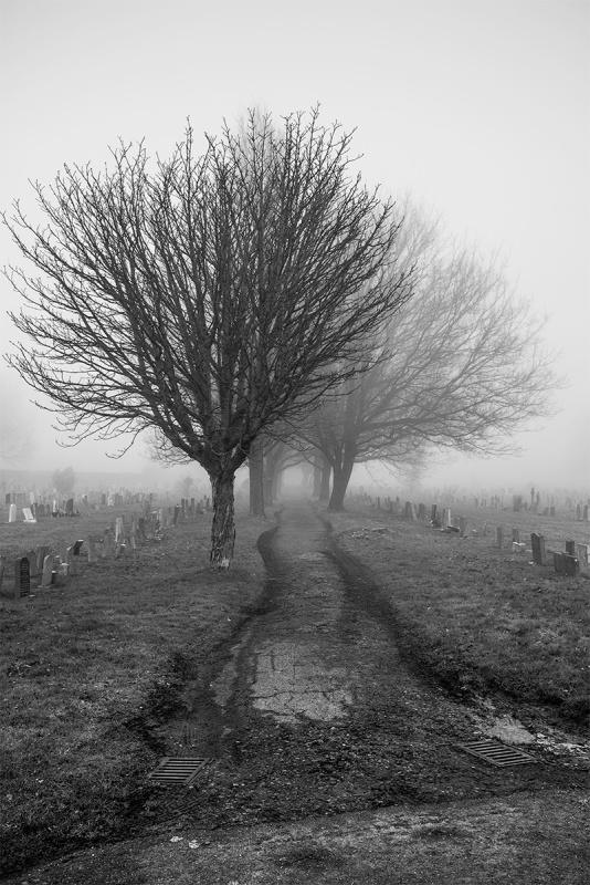 Leafless trees lining dirt track through graveyard in fog. Hove Cemetery North, Sussex UK. Moody and mournful black and white portrait. © P. Maton 2017 eyeteeth.net