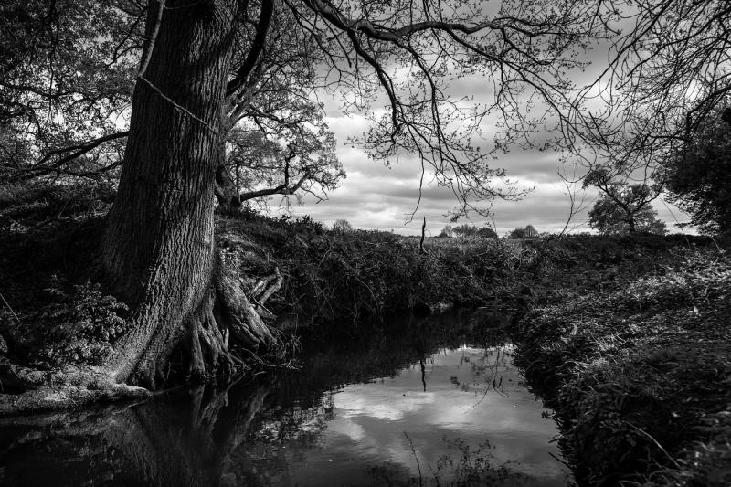 Sunlight falling on Oak tree roots  on bank of stream, Foundry Brook, Stratfield Mortimer Berkshire UK. Black and white rural landscape British countryside. © P. Maton 2017 eyeteeth.net