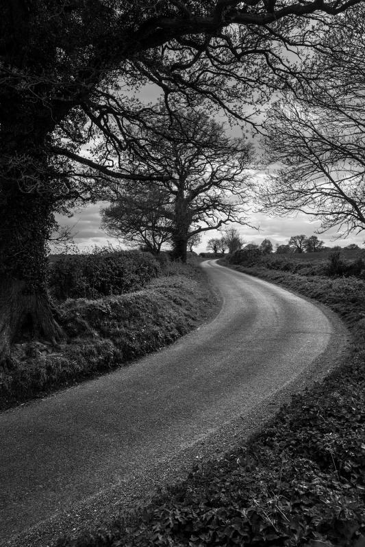 Oak trees by winding road Pitfield Lane, Stratfield Mortimer Berkshire UK. Black and white rural landscape British countryside. © P. Maton 2017 eyeteeth.net