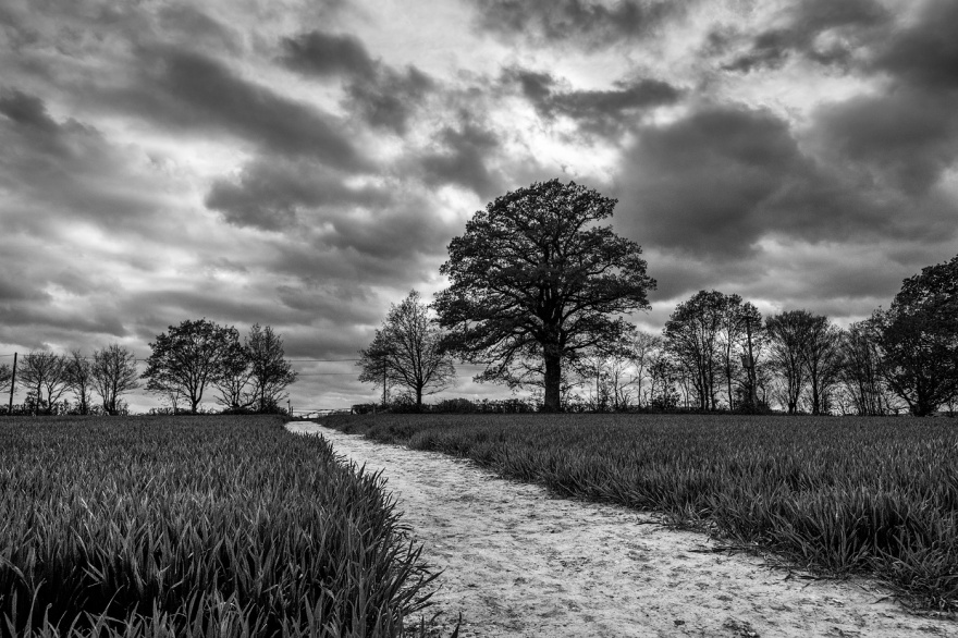 pale dirt footpath through young wheat field leading to gate in tree line on horizon with dramatic cloudy sky, Drury Lane Mortimer Berkshire UK. Black and white rural landscape photography © P. Maton  2017 eyeteeth.net