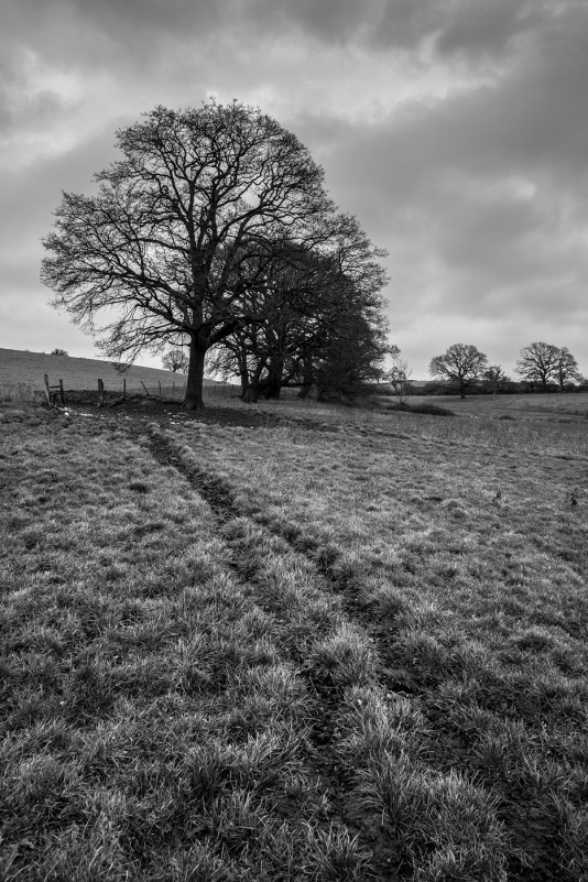 Sheep path in rural countryside with oak trees, hedges and fields. Clappers Lane, Fulking,  West Sussex UK © P. Maton 2017 eyeteeth.net