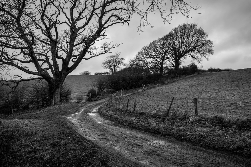 Muddy farm track in rural countryside with oak trees, gate, hedges and fields. Poynings West Sussex UK © P. Maton 2017 eyeteeth.net