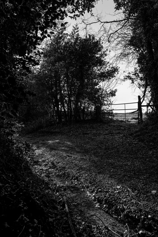 Gateway silhouetted among hedgerow with path in foreground, near Nine Acre Copse, Mortimer, Berkshire UK black and white rural landscape photography countryside Britain ©P. Maton 2017 eyeteeth.net