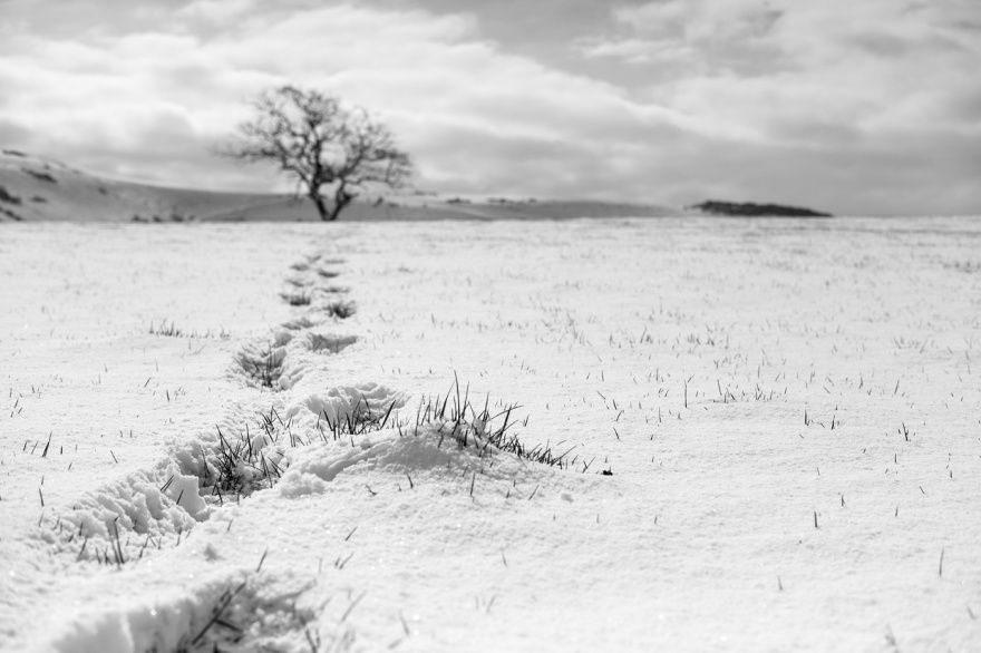 footprints in snow field leading to distant tree with south downs in background, Poynings West Sussex UK rural black and white landscape photograph © P. Maton 2018 eyeteeth.net
