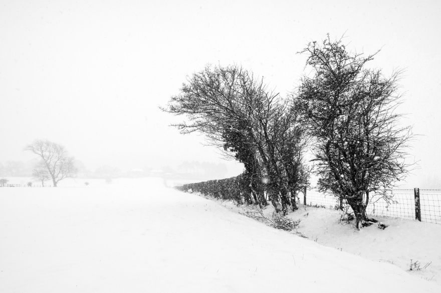 Snow scene with Hawthorn trees and hedgerow disappearing into whiteness, Poynings Wast Sussex black and white rural countryside landscape photograph ©  P. Maton 2018 eyeteeth.net