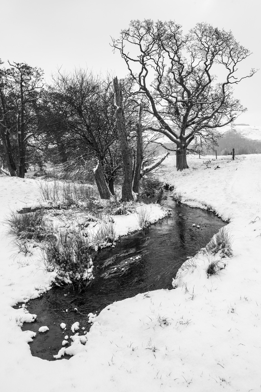 Stream disappearing into snow with trees and Devil's Dyke hill in background, Poynings West Sussex UK black and white rural landscape photograph © P. Maton 2018 eyeteeth.net