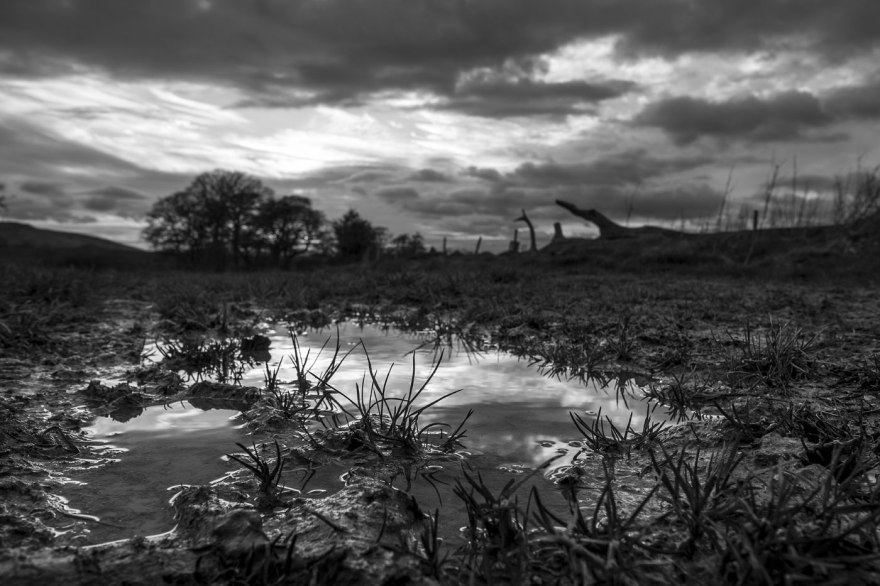 Puddle on footpath in foreground with clumps of grass and reflections of evening sky, Mill Lane Poynings West Sussex UK, blacks and white rural countryside landscape photograph © P. Maton 2018 eyeteeth.net