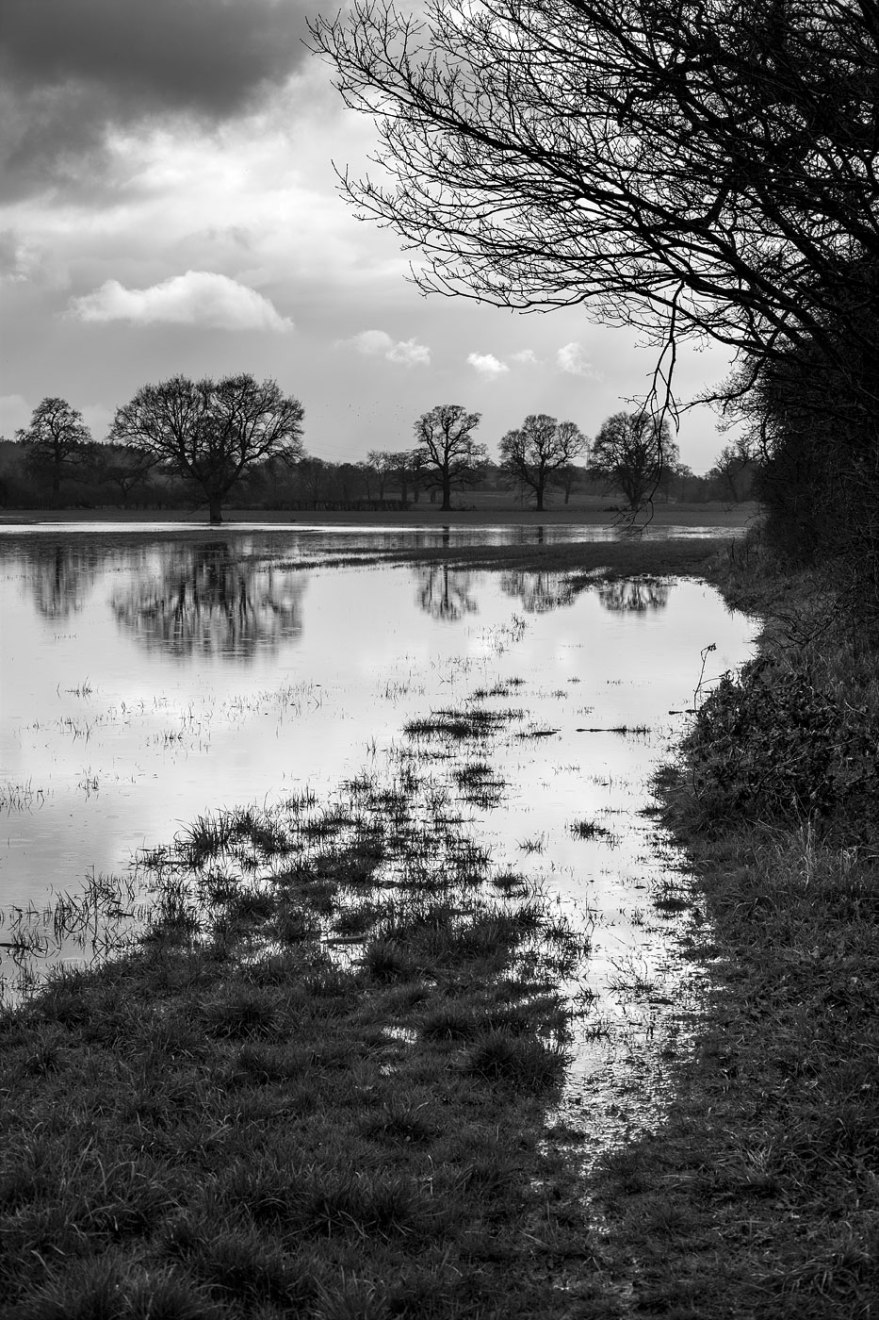 Flood water on fields by hedge with reflection of distant trees Stratfield Mortimer Oxfordshire UK black and white vertical landscape © P. Maton 2018 eyeteeth.net