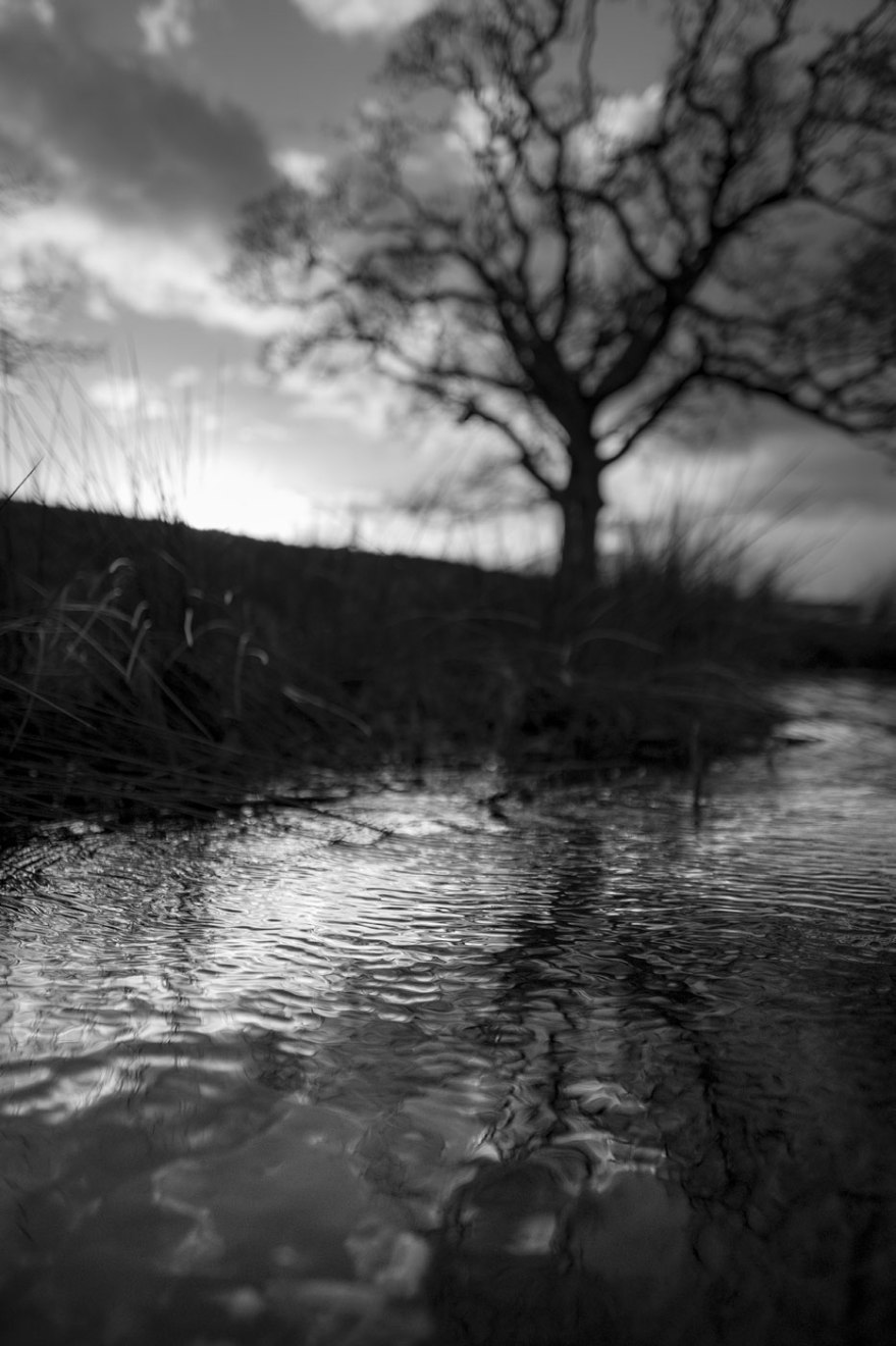 Ripples on surface of stream reflecting light from evening sky and tree in background Mill Lane Poynings West Sussex UK black and white monochrome rural english landscape with bokeh © P. Maton 2019 eyeteeth.net