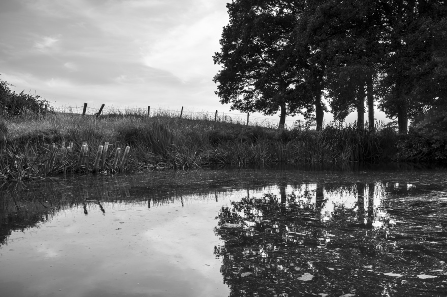 Alder trees reflected in pond with fence along horizon, Mill Lane Poynings West Sussex UK black and white rural British landscape