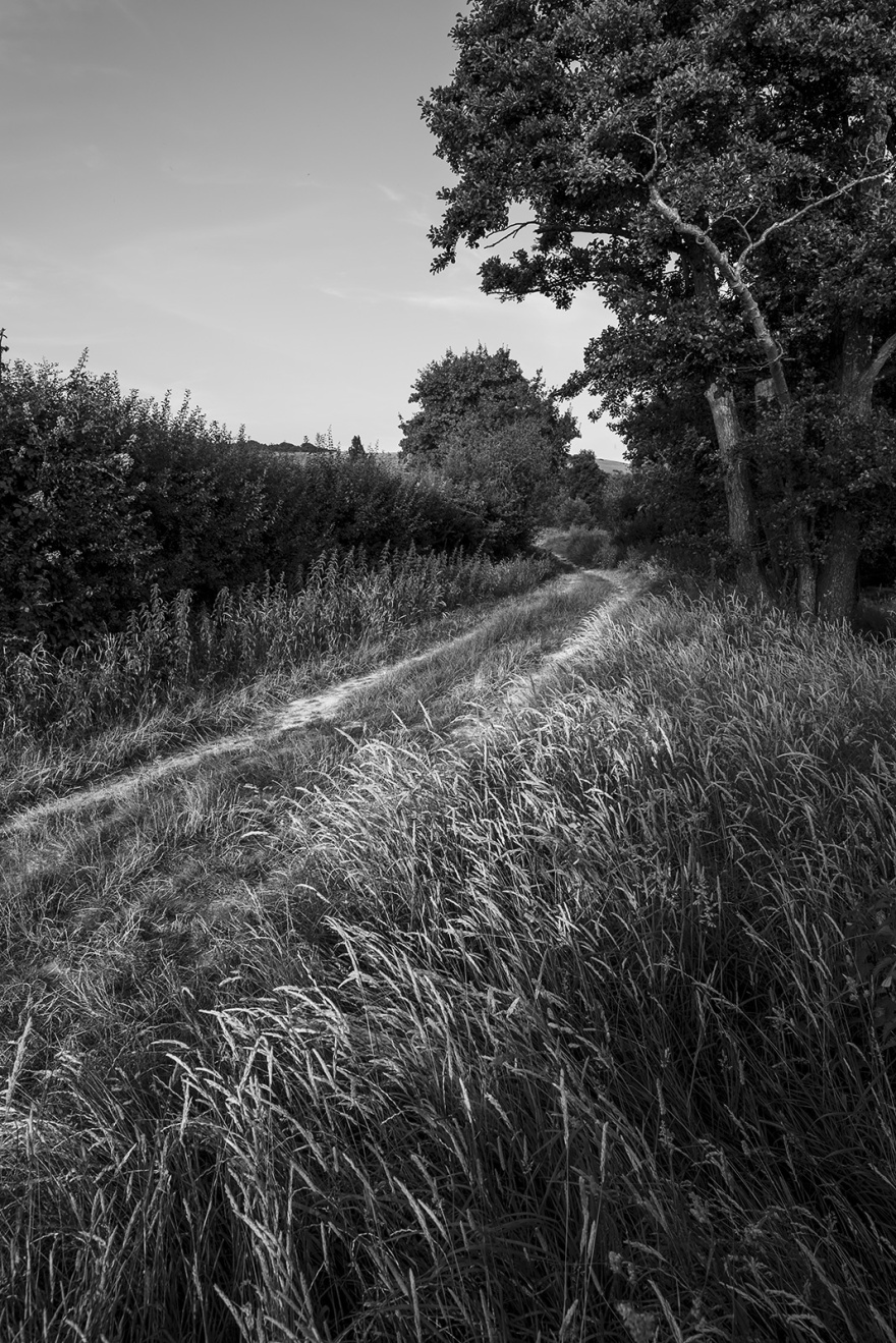 Drying grasses in evening light next to chalk path, Mill Lane Poynings West Sussex UK black and white rural landscape portrait ©P. Maton 2018 eyeteeth.net