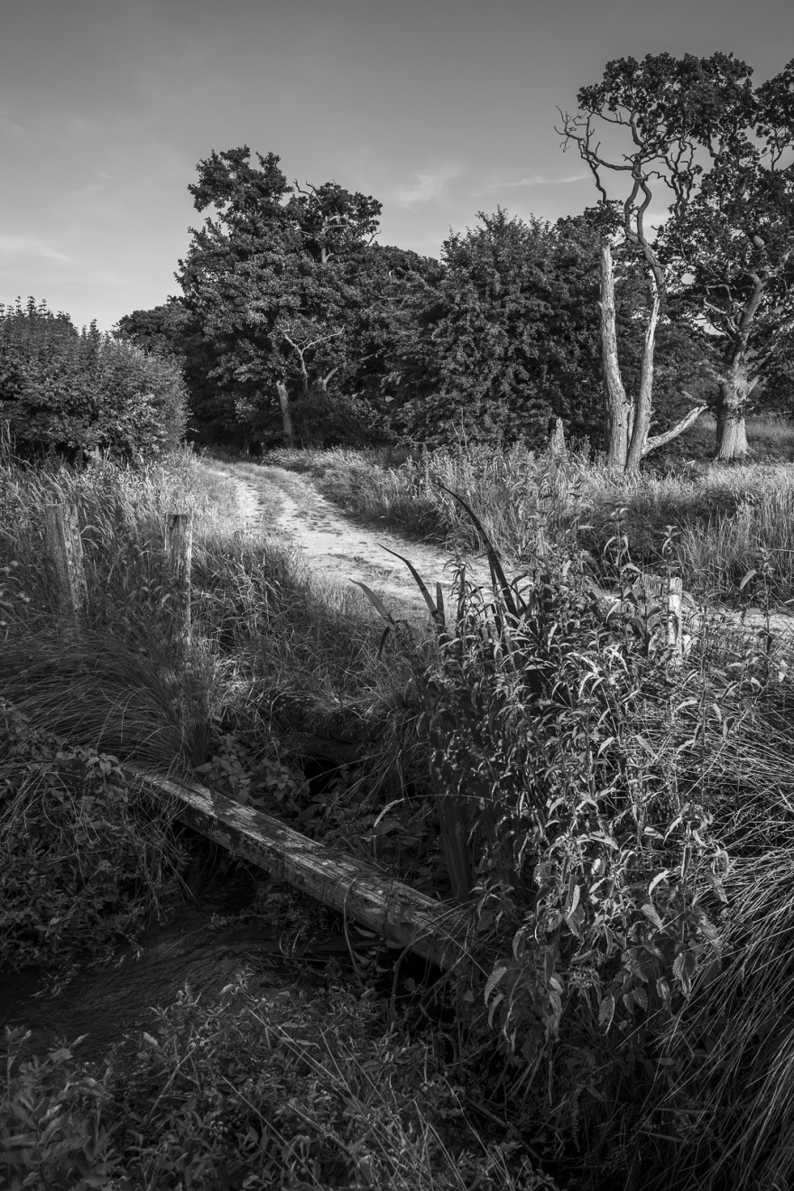 Chalk track crossing stream, Mill Lane Poynings West Sussex UK black and white rural landscape portrait summer evening sunlight ©P. Maton 2018 eyeteeth.net
