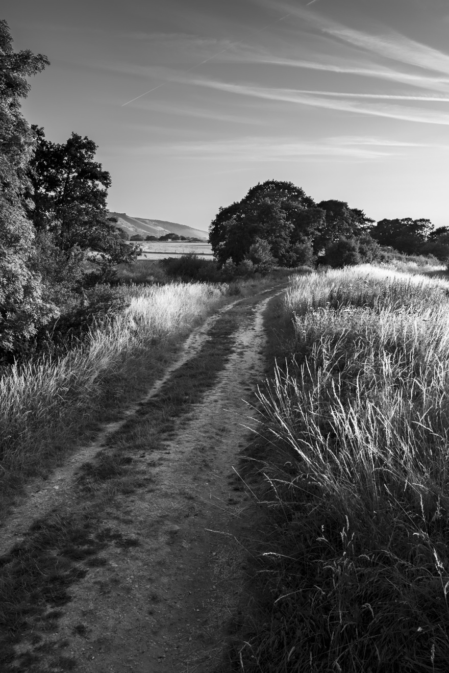 Chalk track through sunlit grasses
