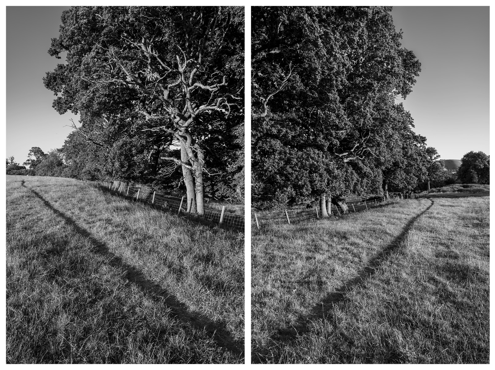 Pathway by Oak trees along meadow margin near Clappers Lane West Sussex UK black and white rural diptych British countryside with South downs in distance © P. Maton 2018 eyeteeth.net