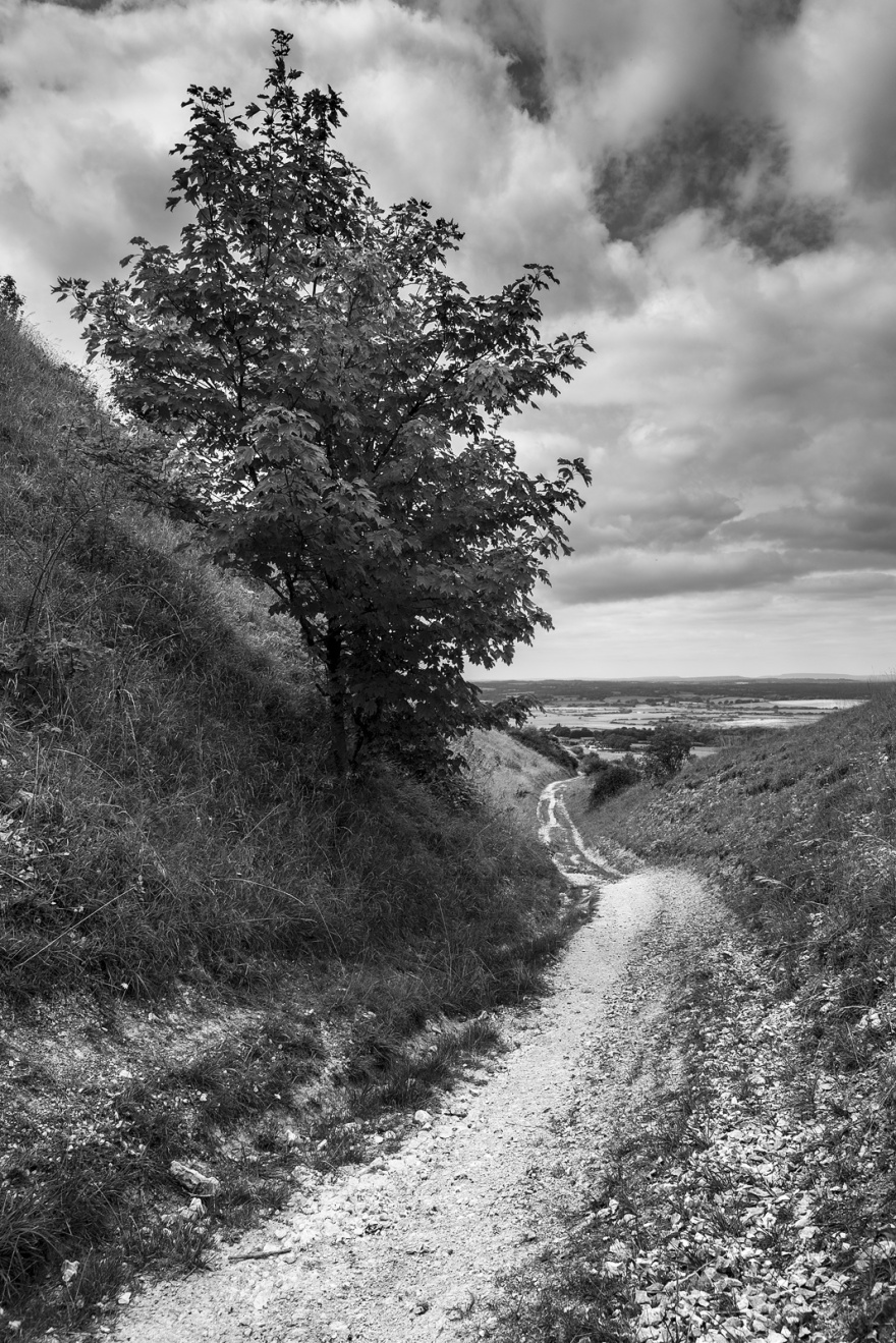 Chalk path with backed sides leading down hill with cloudy sky, tree and view west over s