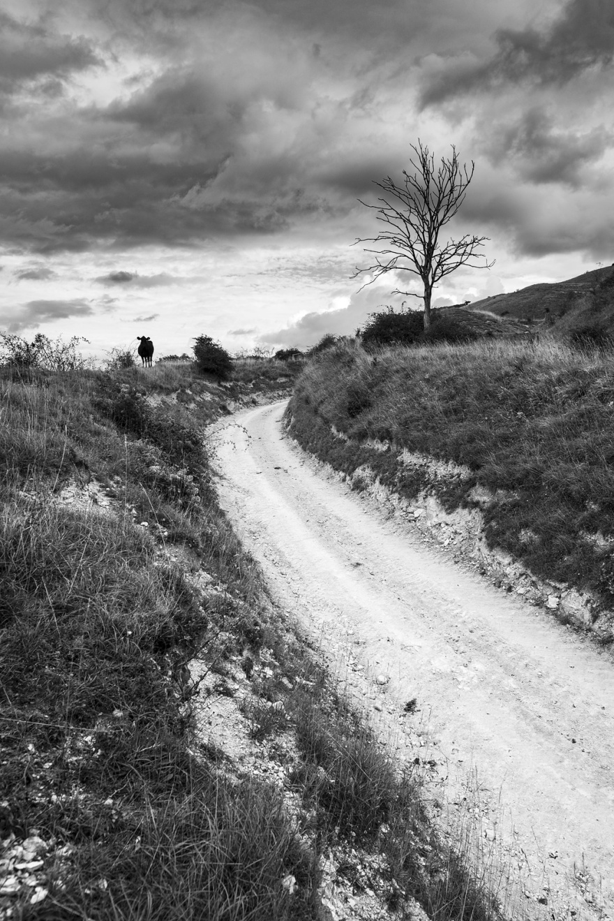 Chalk Droveway road leading up hill dead tree and cow silouette and dramatic sky Edburton Escarpment West Sussex UK Black and white portrait rural landscape photography ©P. Maton 2018 eyeteeth.net