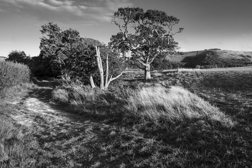 Chalk track by dead tree, Hawthorn and oak tree with Devil's Dyke in background, Mill Lane Poynings West Sussex UK black and white rural landscape portrait early autumn evening sunlight ©P. Maton 2018 eyeteeth.net