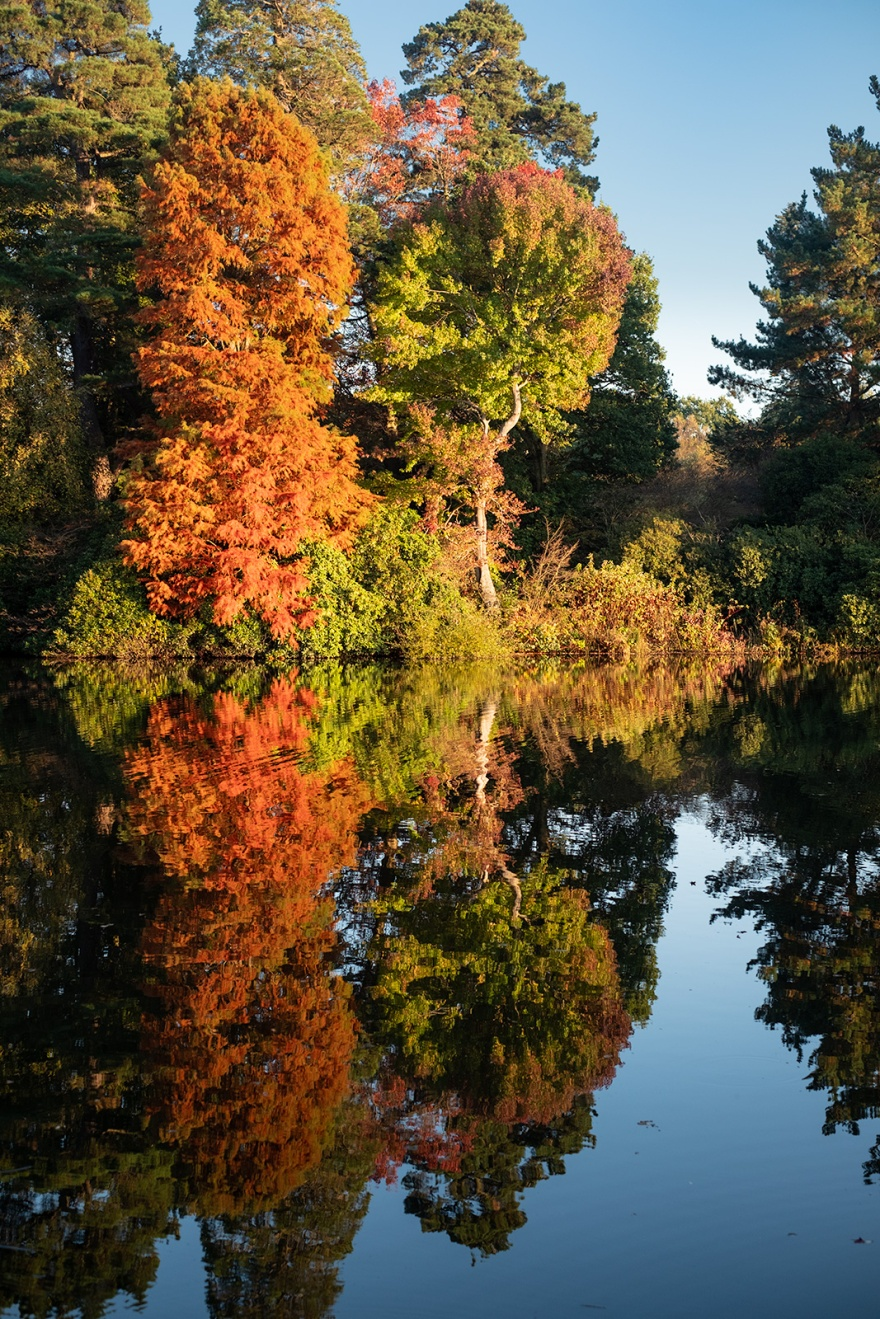 Orange, red, yellow and green autumn trees illuminated by sunlight and reflected in water Sheffield Park East Sussex UK Colour portrait nature photograph © P. Maton 2018