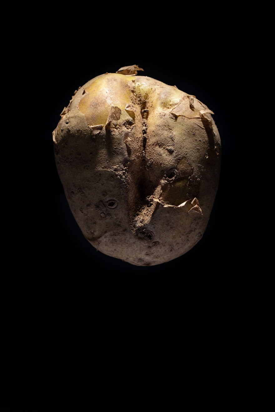 Potato abstract colour portrait lit from above with black background ©P. Maton 2018 eyeteeth.net