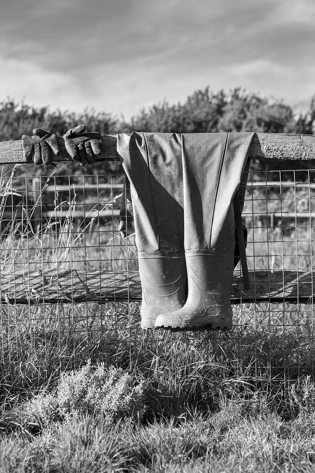 Rubber waders and work gloves draped over wooden fence by dew pond  amid chalk downland flora, Sheepcote Valley, Brighton UK black and white rural portrait photograph ©P. Maton 2018 eyeteeth.net