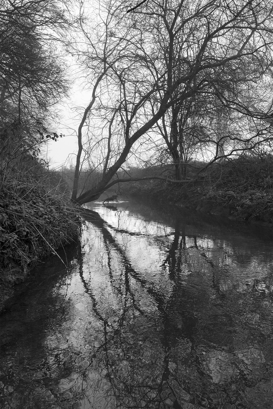 Willow tree leaning over stream reflected in water with mist in background Foundry Brook Stratfield Mortimer Berkshire UK black and white portrait composition nature rural countryside documentary photograph ©P. Maton 2018 eyeteeth.net