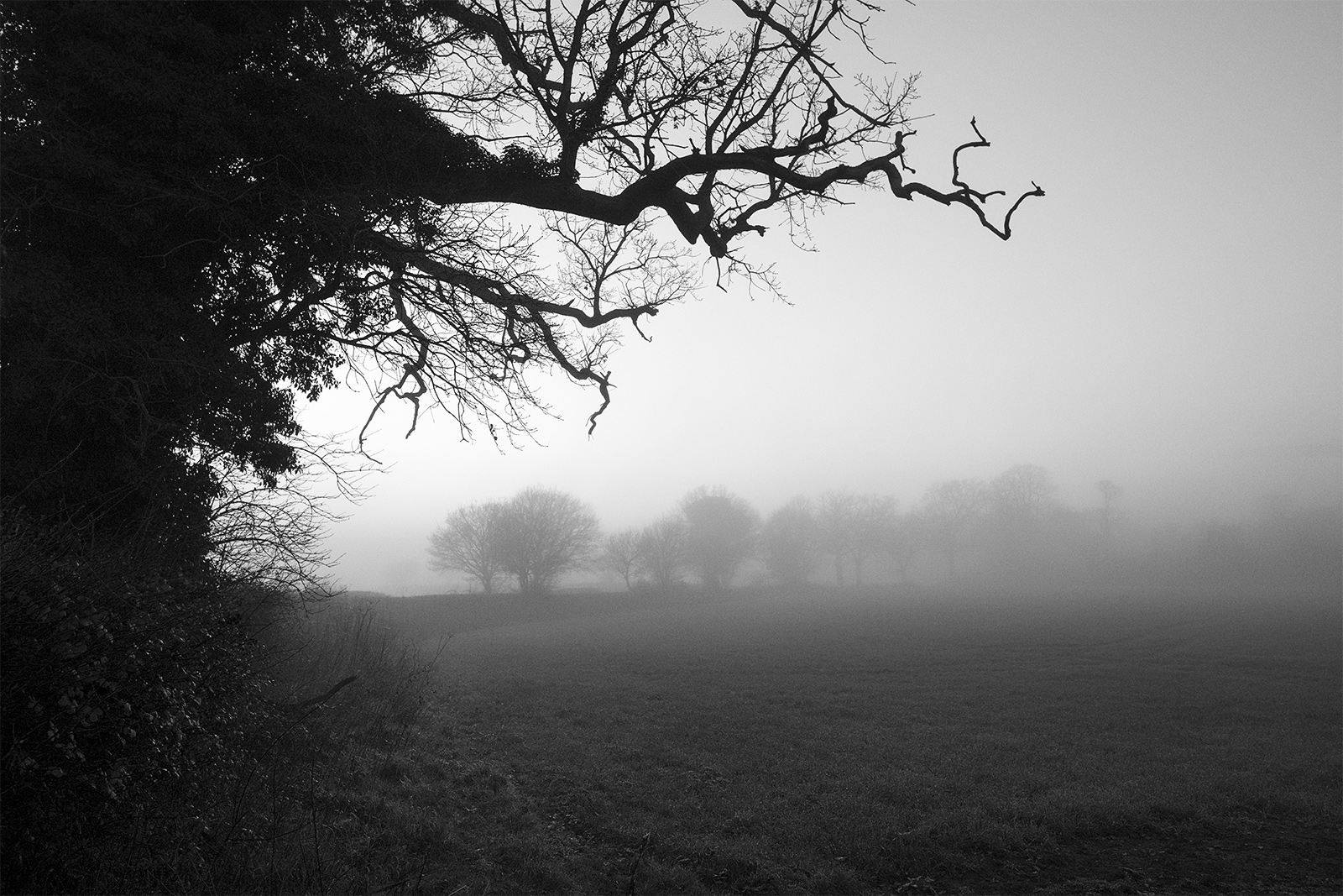Twisted tree branches reaching out from hedge at edge of foggy field with trees in distant mist Stratfield Mortimer Berkshire UK black and white landscape composition nature rural countryside documentary photograph ©P. Maton 2018 eyeteeth.net