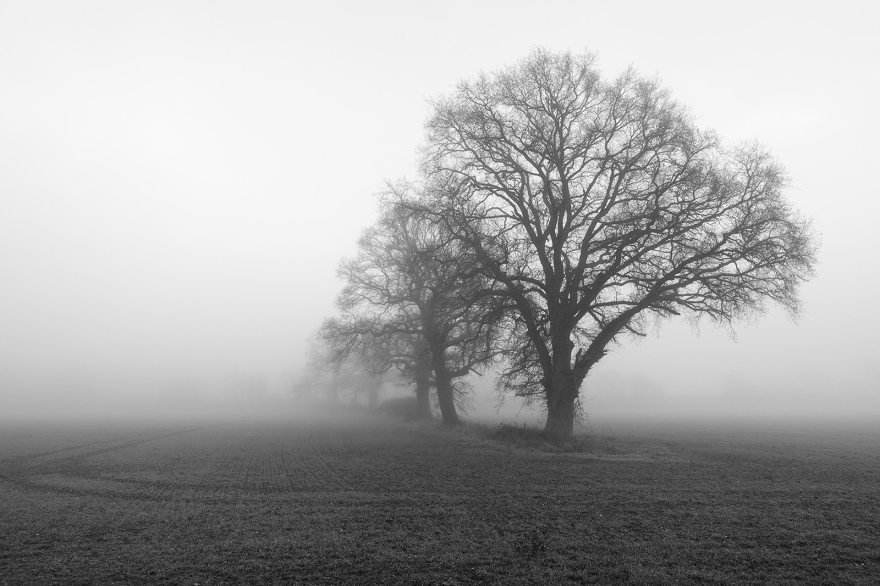 Oak trees in field fading into fog, Stratfield Mortimer Berkshire UK black and white landscape composition nature rural countryside documentary photograph ©P. Maton 2018 eyeteeth.net