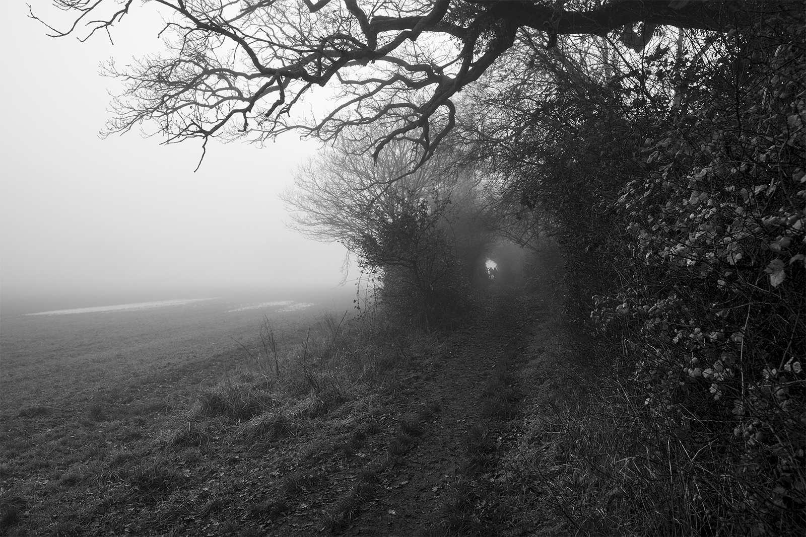 Footpath next to field leading into tunnel through hedgerow with distant figures silhouetted in the fog, Stratfield Mortimer Berkshire UK black and white landscape composition nature rural countryside documentary photograph ©P. Maton 2018 eyeteeth.net
