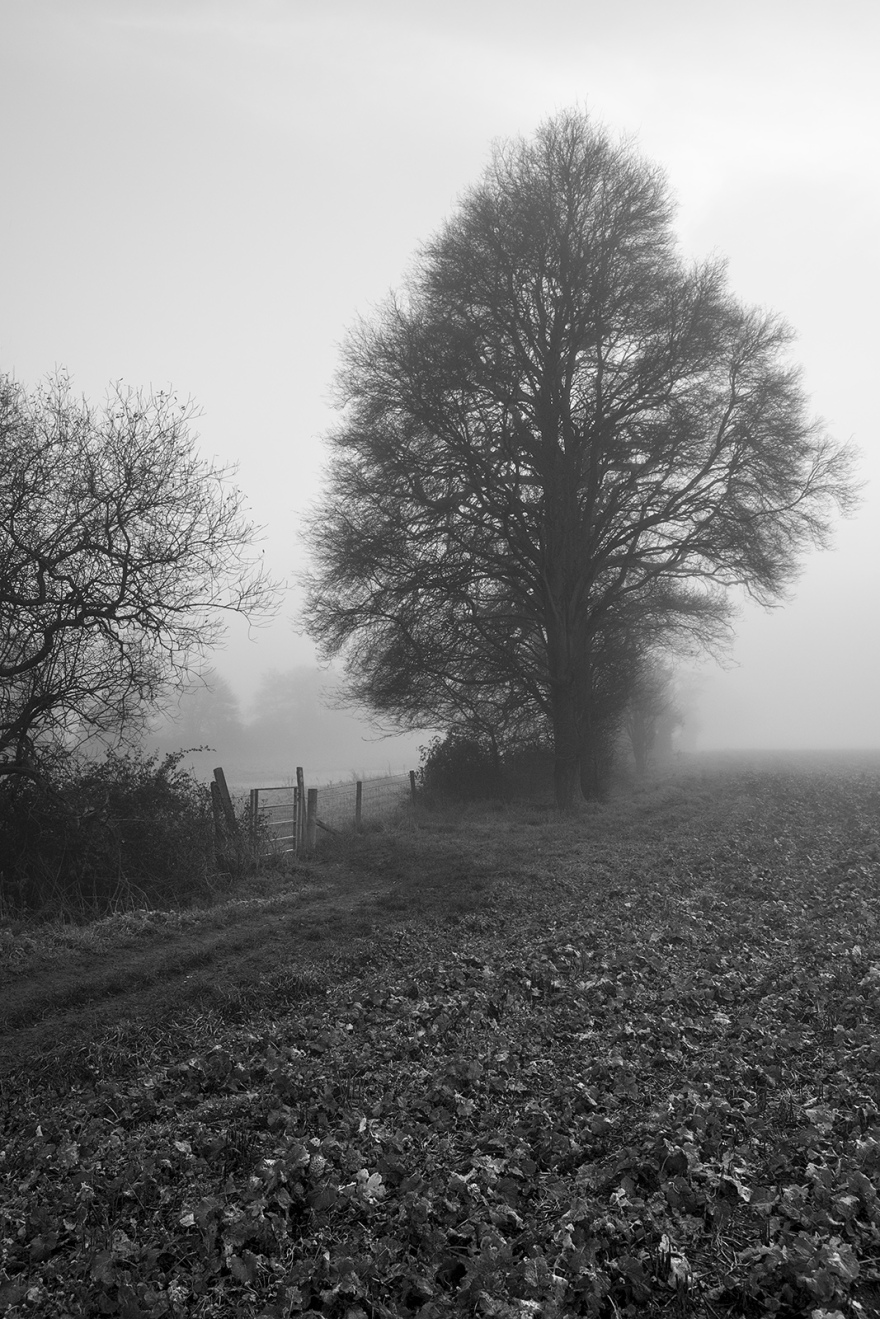 Footpath leading to gate by trees in fog Stratfield Mortimer Berkshire UK black and white landscape composition nature rural countryside documentary photograph ©P. Maton 2018 eyeteeth.net