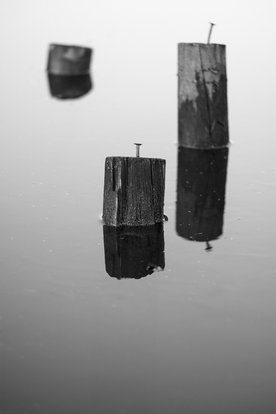 Nails in tops of wooden posts standing in water with reflections, black and white abstract portrait composition photograph, Mill Lane Poynings West Sussex UK ©P. Maton 2019 eyeteeth.net