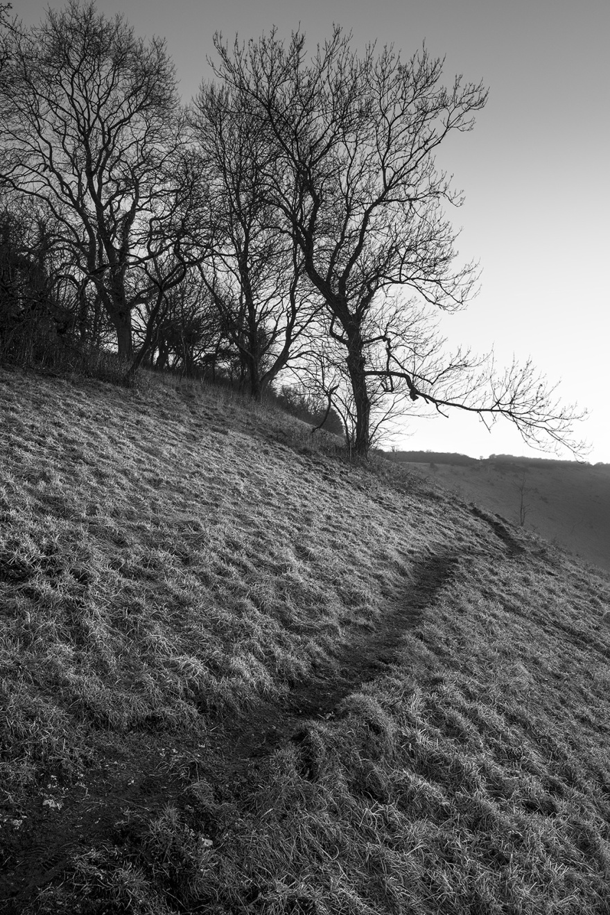 Ash trees by path on south bank of Devil's Dyke West Sussex UK black and white rural landscape portrait ©P. Maton 2019 eyeteeth.net