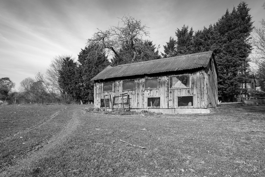 Old chicken shed on sunny day with conifer trees in background Castle Hedingham Essex UK black and white rural landscape photography ©P. Maton 2019 eyeteeth.net